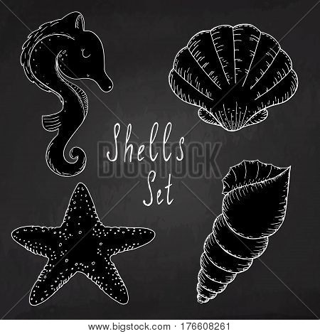 Hand drawn black and white vector illustrations - collection of seashells. Marine set.