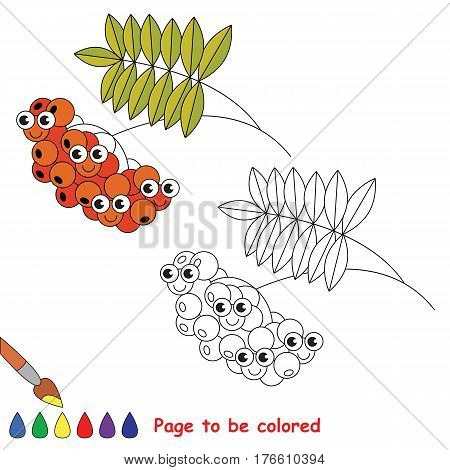 Red Ash Berry to be colored. Coloring book to educate kids. Learn colors. Visual educational game. Easy kid gaming and primary education. Simple level of difficulty. Coloring pages.