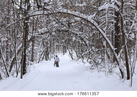 Forest and snow. Clean air and frosty day. People go along the path.