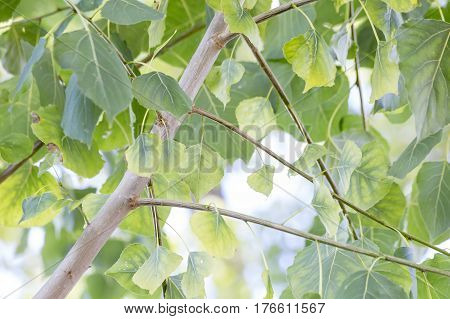 Treetops with green leaves on the blue sky background