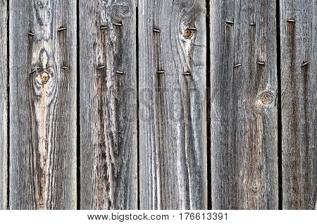 Black painted weathered wooden fence with clinched rusty nails