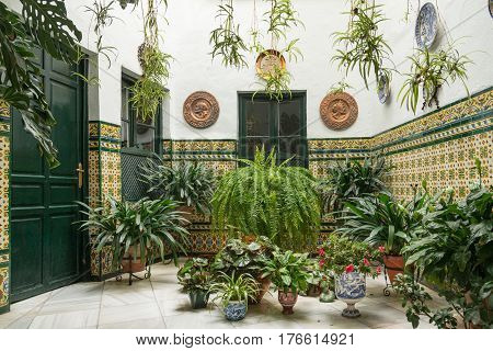 Cozy courtyard with plants and fountains of traditional Spanish house