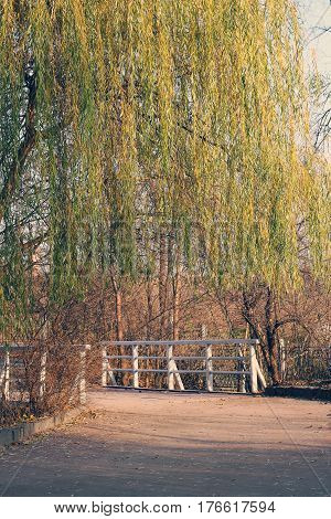 Autumn Landscape. Weeping Willows In Autumn, Road To The Bridge In The Park.