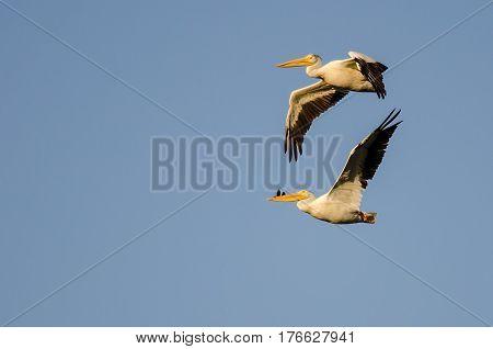 Pair of American White Pelicans Flying in Blue Sky