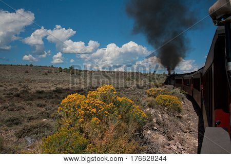 Wildflowers in the foreground of a Colorado scene with steam train in background.