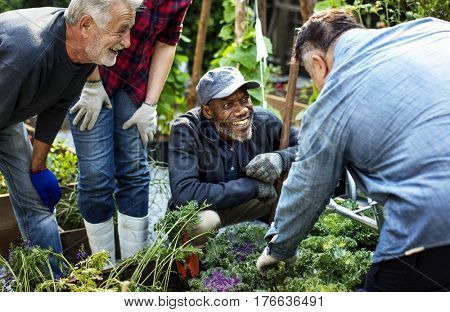 Group of people planting vegetable in greenhouse