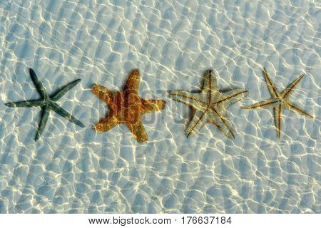 beautiful starfishes under water