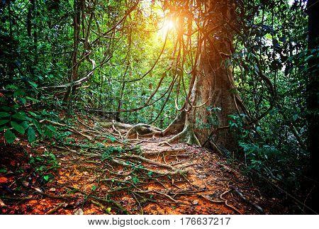 inside jungla in borneo malaysia