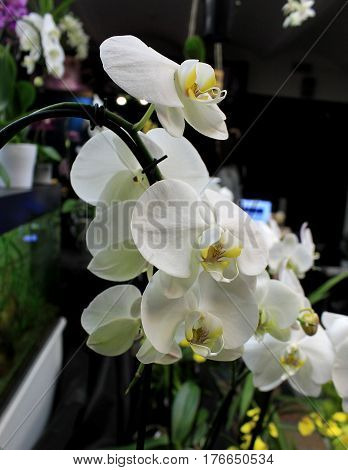 Orchids flowers of rare varieties exotic epiphytes