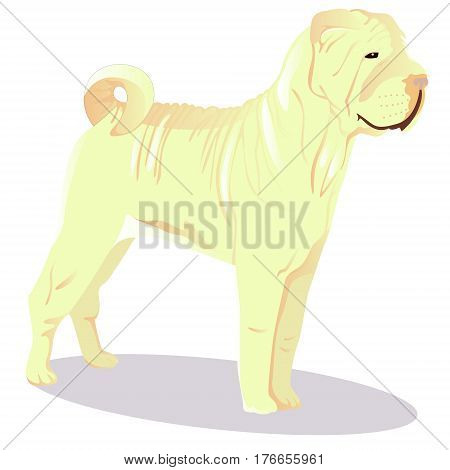 Chinese shar pei dog white vector illustration