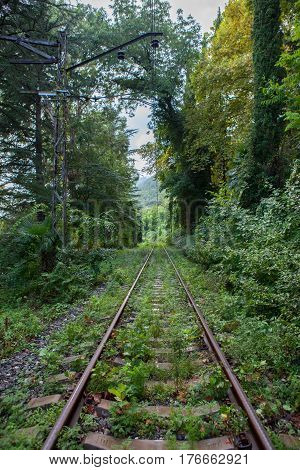 Old abandoned railroad goes away into the distance through a thick green forest