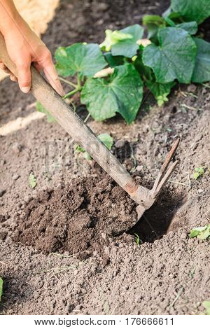 Closeup Woman Gardener Digging Soil