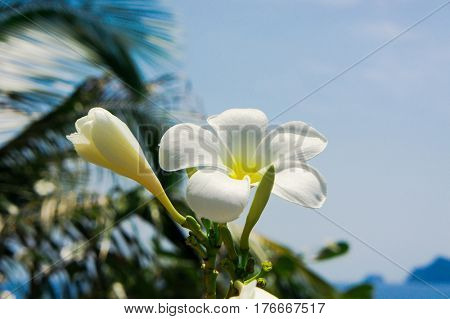 Exotic Paradise Tropical Verdure