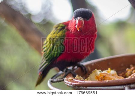 Red Bird With Green Wings And Red Spout