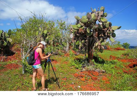 GalapagosWoman photographing prickly pear on Rabida Island in Galapagos National Park Ecuador. It is endemic to the Galapagos Islands.