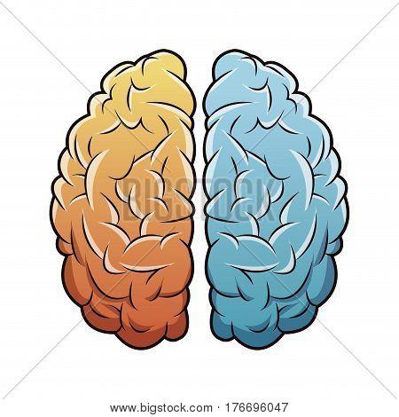 human brain anatomy image vector illustration eps 10