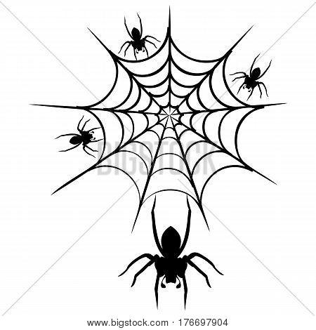 spider web vector spider black widow spider animal wildlife