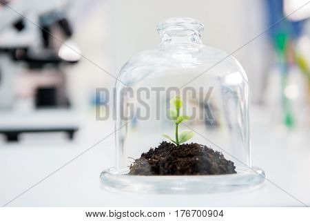 Close-up view of fresh green plant growing in glass terrarium