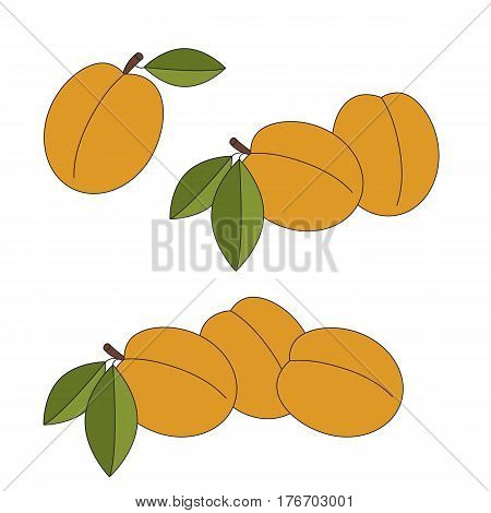Apricots cartoon. Outlined apricots with black stroke.