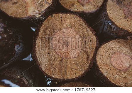 Wood texture of cut tree trunk. Cut tree trunk with annual rings. Wood background or texture for designers. Pine logs in winter forest. Wooden trunks background.