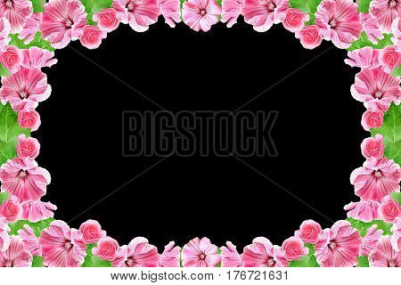 Petunias isolated on a black background. Colorful flowers.