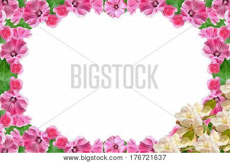 Flowering branch of apple isolated on a white background. Petunia flowers.