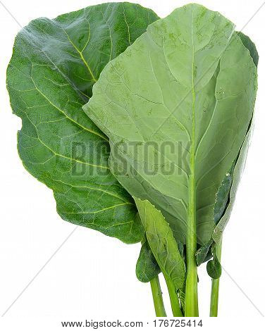 Chinese kale vegetable kale, chinese, isolated, background, white, vegetable