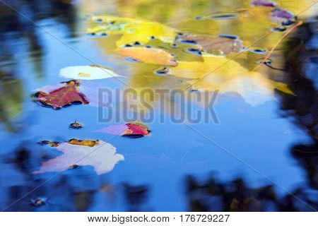 Fall composition autumnal Leaves floating in the Puddle with sky reflections
