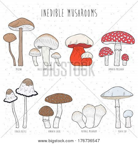 Set of inedible mushrooms with titles on white background, Hand drawn vector colorful illustration collection.
