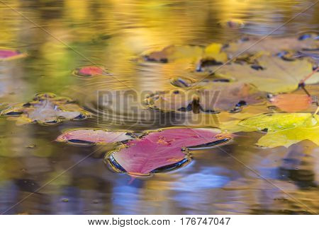Autumn Composition Beauty in Nature close up of fallen red and yellow leaves in rain puddle with colourful reflection of sky and trees