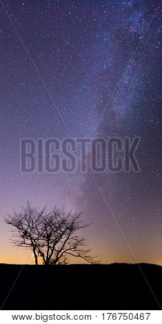 Night landscape with vibrant Milky Way at mountains. Starry sky with tree at summer. Beautiful Universe. Space background. Night sky with Milky Way