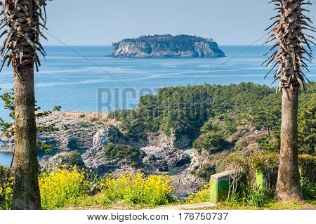 view of  at the jeju olle trail with rape flowers and seopseom isle at Jeju island Korea