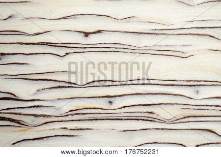 High quality closeup birch burl wood grain texture natural pattern background for design art work or add text.