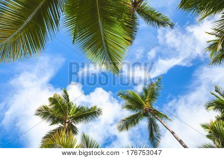 Coconut Palm Trees Over Cloudy Sky