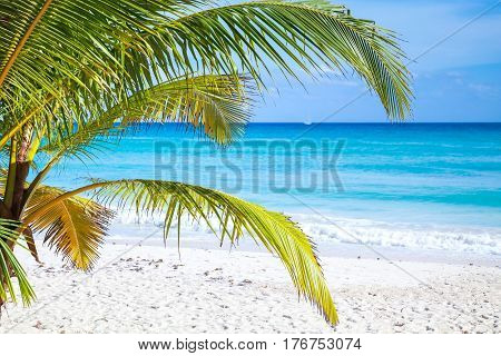 Palm Branches On Tropical Sandy Beach