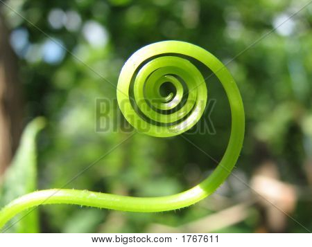 Green Spiral