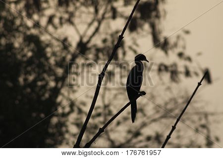 Silhouette of an exotic bird sitting on a tree branch on a gray background