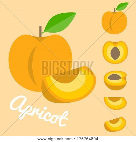 Vector apricot, Half and slice apricot vector set, flat design
