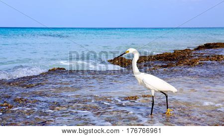 Bird with the dark blue sea. Heron in the water. Heron with dark blue sky in caribbean.