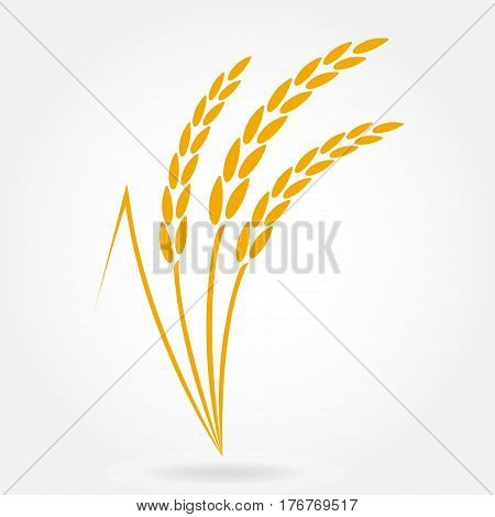 Wheat ears or rice icon. Design elements for bread packaging or beer label. Agricultural wheat and rice symbol. Vector illustration.