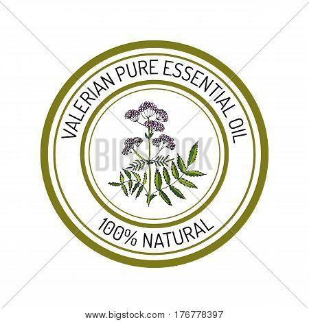 valerian, essential oil label, aromatic plant Vector illustration