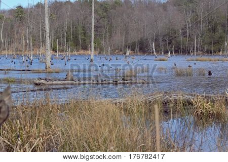 Wetland with bare trees and tall grasses