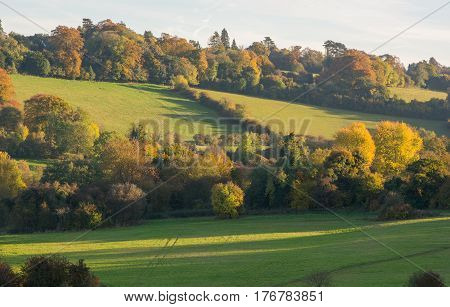 Banstead woods in Surrey England. Autumn (Fall) colours in trees.