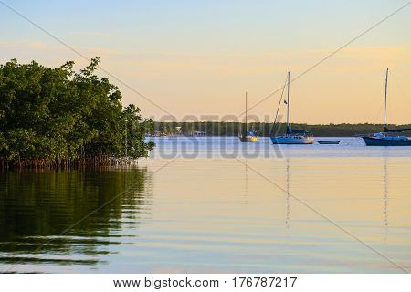Sailboats And Mangroves