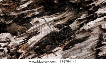 Wood texture / Corroded trunk / Dry trunk worn by water