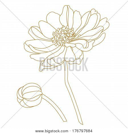 Golden floweGraphical golden flower illustration. golden flower, contour flower, bloom flower, decorative flower, isolate flower, blossom flower, monochrome flower. Vector.r, bud, stem, blossom. Vector illustration.