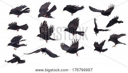 Set Of One Bird Compilation On White Background