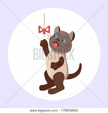 Cat breed cute kitten brown pet portrait fluffy young adorable cartoon animal and pretty fun play feline sitting mammal domestic kitty vector illustration. Beautiful posing playful paw design.