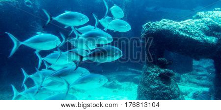 Lot of fishes in a natural dark blue water tank. New Providence Island, Nassau, Bahamas.