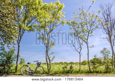 Spring Trees With Bicycle